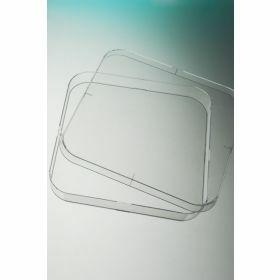 Boîte Pétri 120x120mm carrée, aseptique